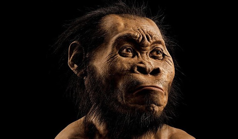 "This March 2015 photo provided by National Geographic from their October 2015 issue and made available on September 10, 2015 shows a reconstruction of a Homo naledi face by paleoartist John Gurche at his studio in Trumansburg. The fossilised bones of 15 members of a previously unknown branch of the human family tree have been discovered in a cave in South Africa, scientists said on September 10, 2015, hailing the find as a breakthrough in evolution research. About 1,500 fossils were found deep in a cave system outside Johannesburg, hidden in a chamber only accessible via several steep climbs and narrow rock crevasses. The hominid -- described as a ""new species"" of human -- has been named Homo naledi after the ""Rising Star"" cave where the bones were found. Naledi means ""star"" in Sesotho, a local South African language. AFP PHOTO/HO/NATIONAL GEOGRAPHIC/MARK THIESSEN = RESTRICTED TO EDITORIAL USE - MANDATORY CREDIT ""AFP PHOTO / NATIONAL GEOGRAPHIC / MARK THIESSEN"" - NO MARKETING - NO ADVERTISING CAMPAIGNS - IMAGE MUST INCLUDE NATIONAL GEOGRAPHIC LOGO - CROPPING NOT PERMITTED - DISTRIBUTED AS A SERVICE TO CLIENTS ="